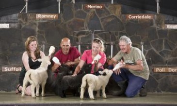 School Holidays In Rotorua - Agrodome Sheep Show and Rainbow Springs Combo