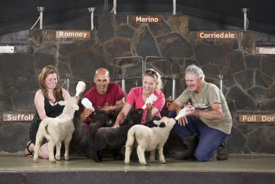 Agrodome Sheep Show and Rainbow Springs Combo
