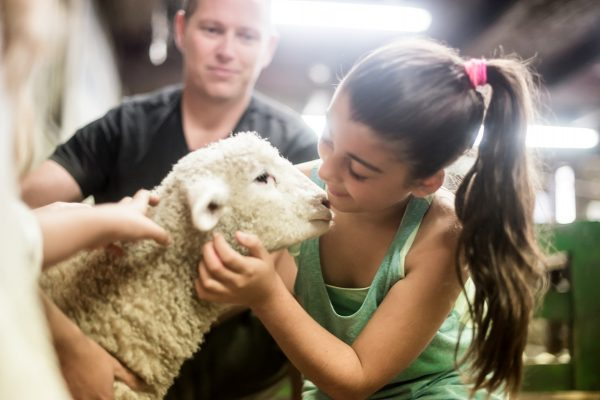 Agrodome Lamb