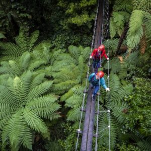 Small group of adventures crossing a swing bridge through a forest in Rotorua