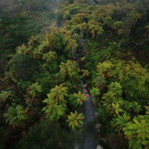 SUP Through the trees Rotorua Super Passes